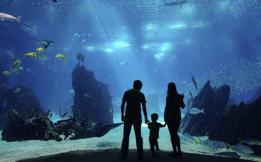 Турция. Стамбульский аквариум.