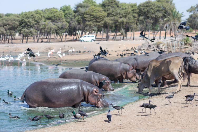 Израиль. Зоологический центр Сафари в Рамат-Гане.