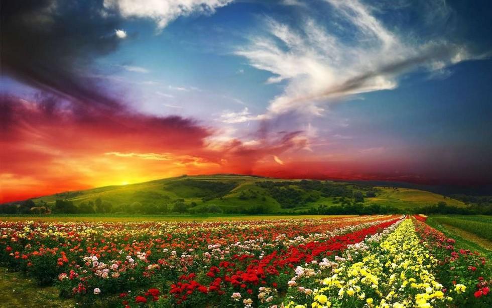 Индия. Долина Цветов.