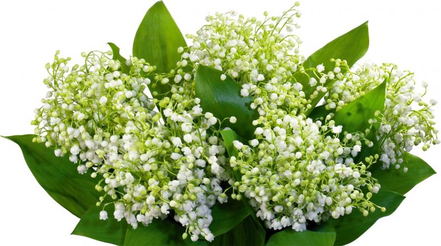Цветок Ландыши