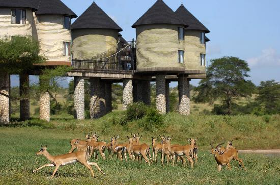 Кения. Восточный Цаво.