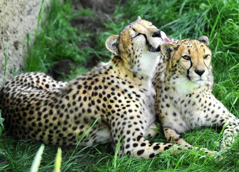 ЮАР. Зоопарк Митчелл Парк.