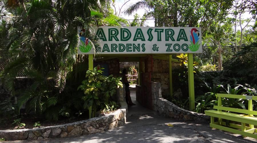 Багамские Острова. Ардастра