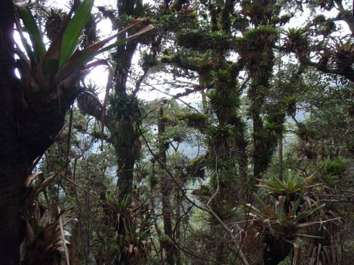 Гондурас. Национальный парк Селак.