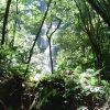Гондурас. Парк Нейшнел Ла Тигра.