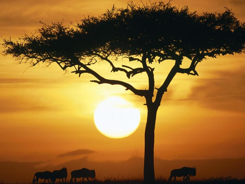 4101 Кения. Масаи-Мара.