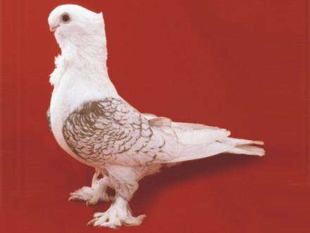 3826 Английская совиная чайка