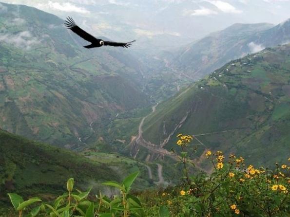 Эквадор. Национальный парк Подокарпус.