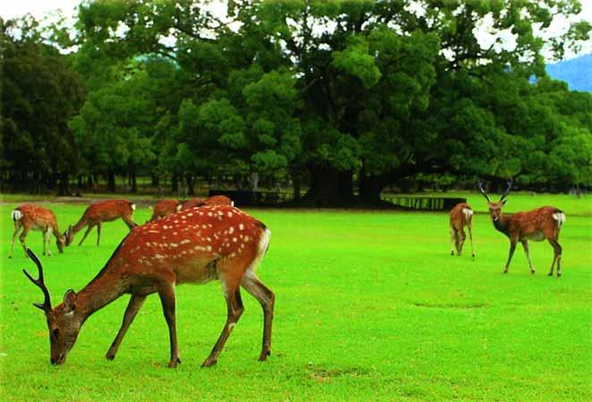 Парагвай. Серро Кора национальный парк.