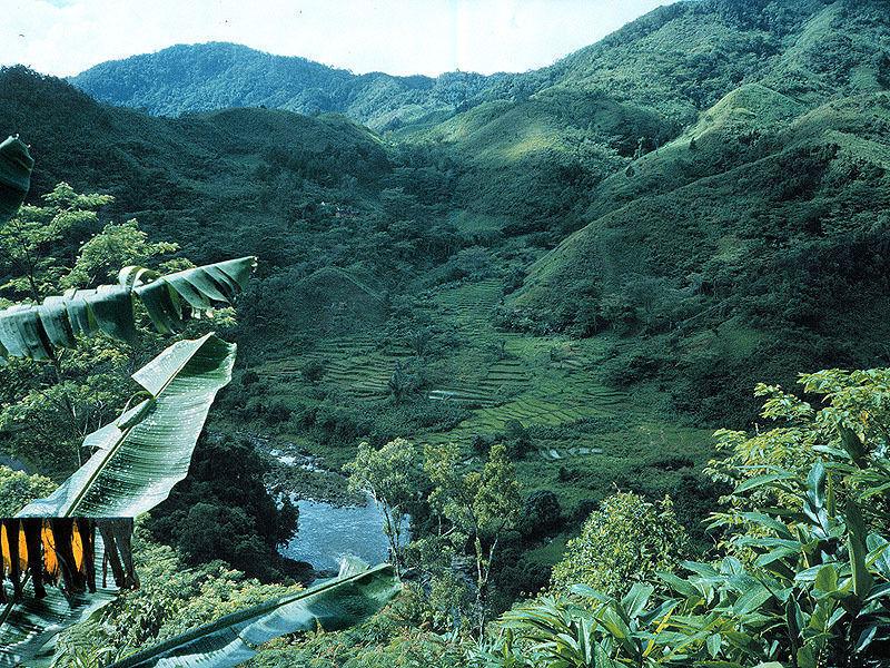 Мадагаскар. Национальный парк Раномафана.