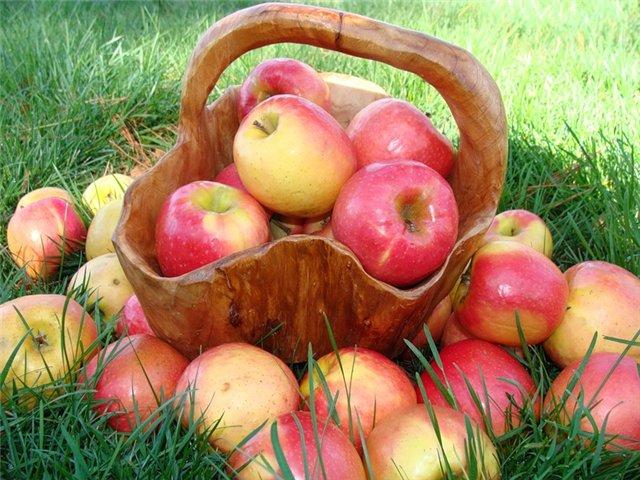 Что полезно кушать? Яблоки.