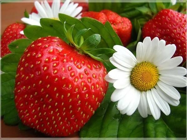 6175 Что полезно кушать? Земляника садовая (клубника).