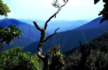 Ямайка голубые горы
