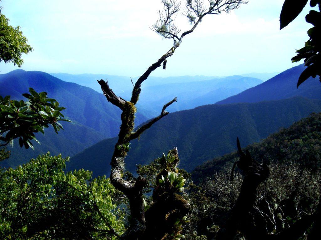 Ямайка. Голубые горы.