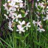 6554 Лекарственные растения. Овес посевной, Бузина черная, Облепиха, Мята перечная.
