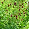 6532 Лекарственные растения. Зверобой, Золотой корень, Жостер слабительный.
