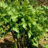 6549 Лекарственные растения. Овес посевной, Бузина черная, Облепиха, Мята перечная.