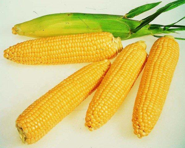 Что полезно кушать? Кукуруза.
