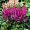 Лекарственные растения. Артишок посевной, Валериана, Болиголов пятнистый. фото - hhg 100x100