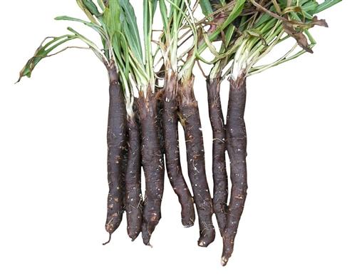 Что полезно кушать? Скорцонера (Черный корень).