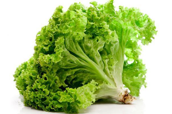 Что полезно кушать? Салат(Латук посевной).