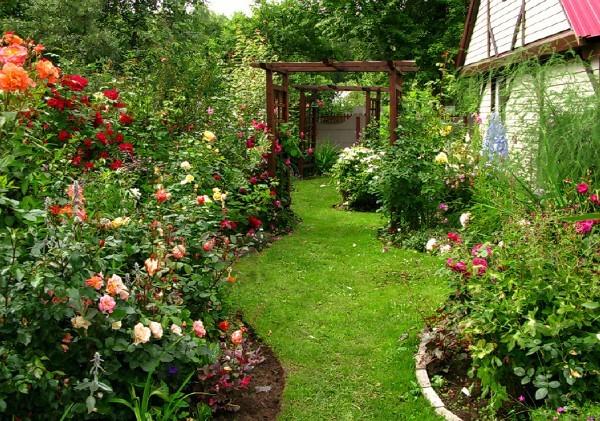 Штамбовые розы. Какие виды существуют ?
