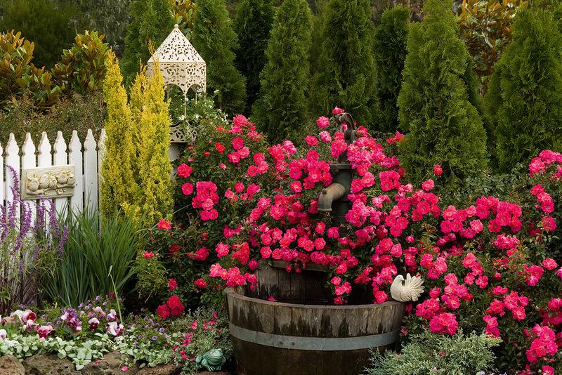 Красочно и ароматно в саду