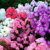 8685 Формальный сельский сад