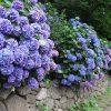 8684 Формальный сельский сад