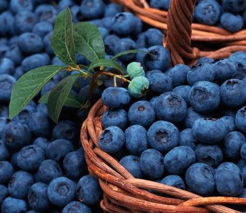 Вкусные  ягоды для сада, голубика высокорослая