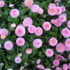Первая помощь, сорняки на газоне фото - 821 100x100