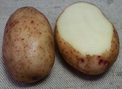 Картофель, сорт Тирас.