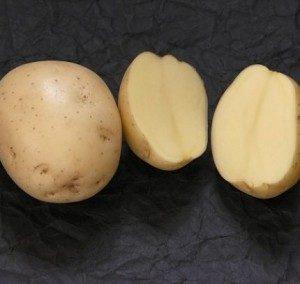 Картофель, сорт Ривьера.