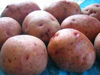 Картофель, сорт Повинь.