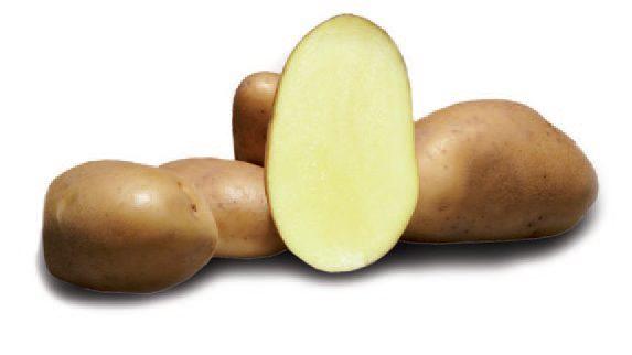 Картофель, сорт Бернадетте.