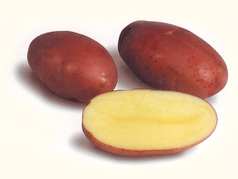 Картофель, сорт Ароза.