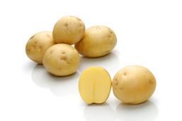 Картофель, сорт Сатина.