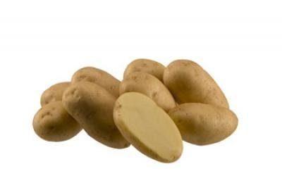 Картофель, сорт Импала
