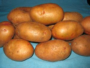 Картофель, сорт Серпанок