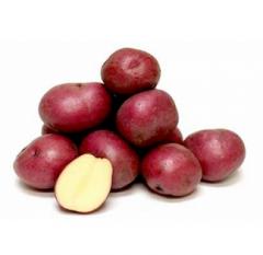 Картофель, сорт Аладин