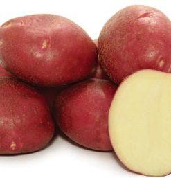 Картофель, сорт Симпли Ред