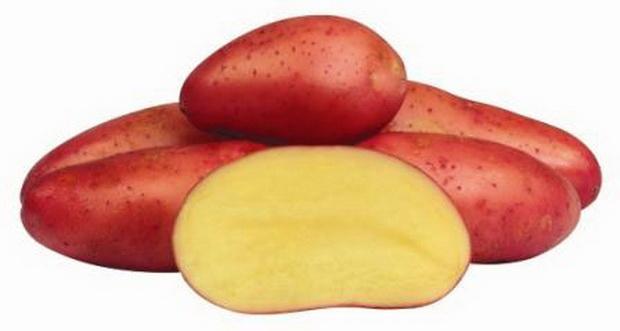 Картофель, сорт Амороза.