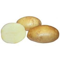 Картофель, сорт Эроу.
