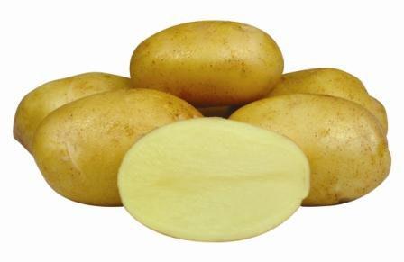 Картофель, сорт Джелли