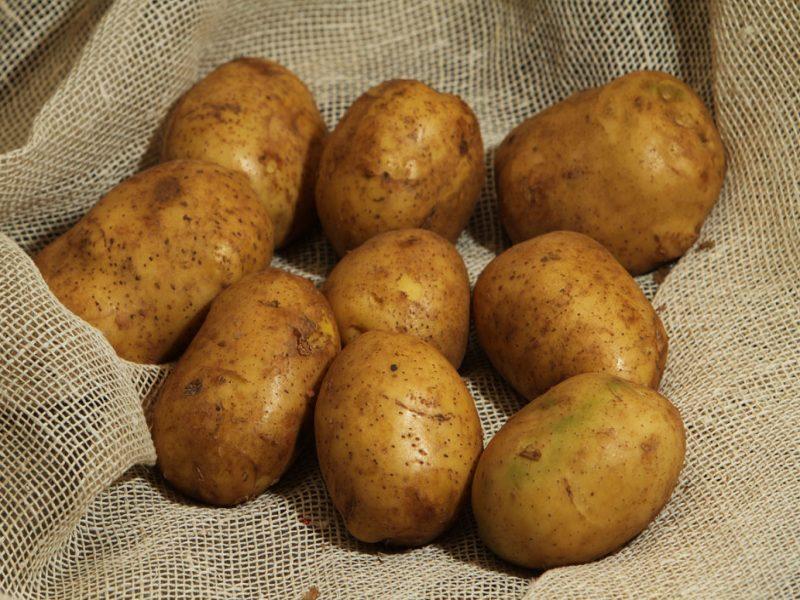 11585 Картофель, сорт Днепрянка.