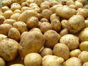 Картофель, сорт Луговской.