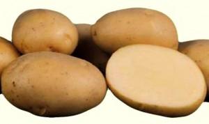 Картофель, сорт Ланорма.