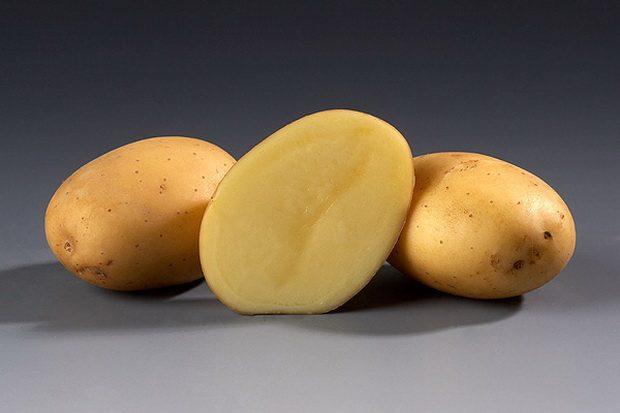 Картофель, сорт Витессе.