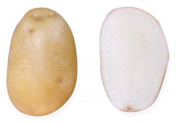 11615 Картофель, сорт Невский