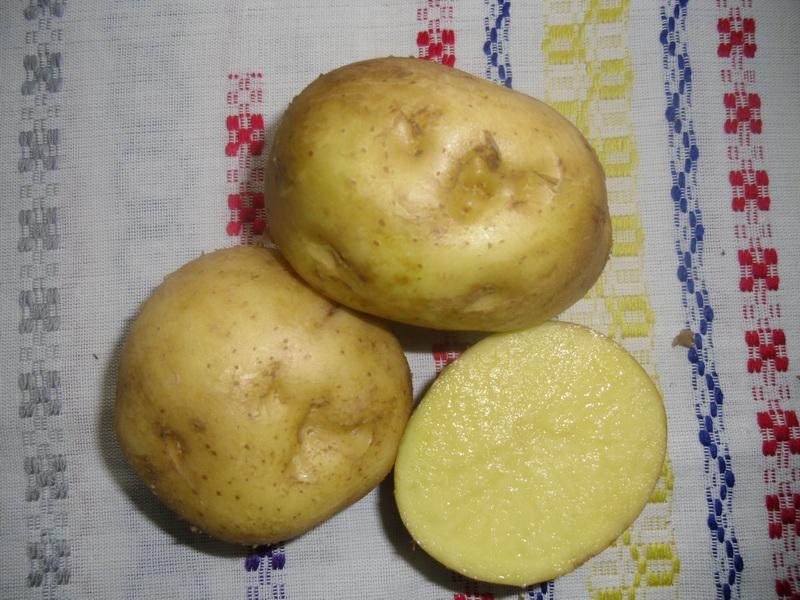 Картофель, сорт Кобза.